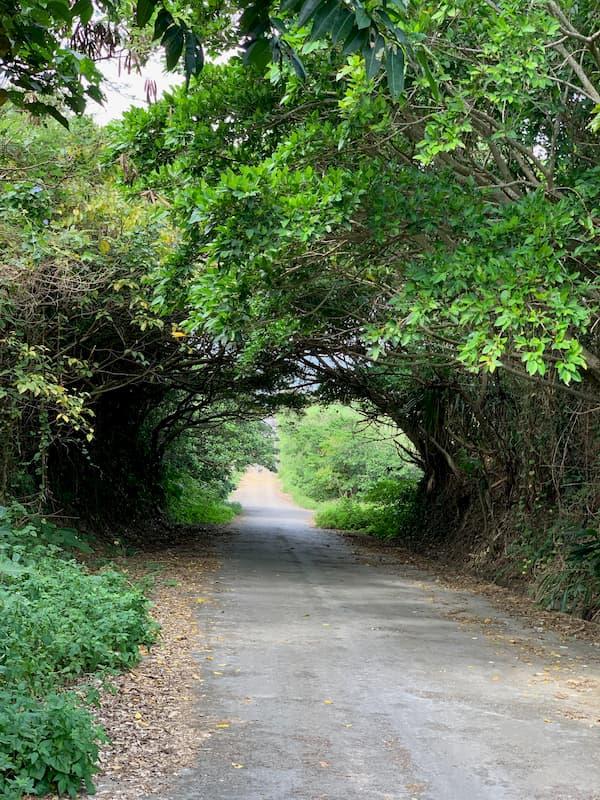 坂道が多い小浜島